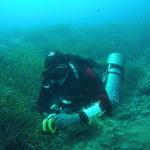 indagini-subacquee-vada